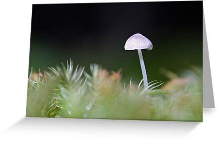 Tiny in the Rainforest: Iluka, NSW by SunshineKaren