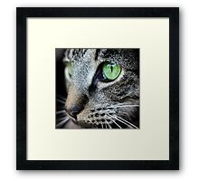 That Gaze Framed Print