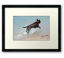 Dogs Day Framed Print