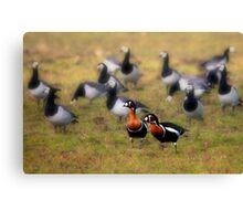 Red-breasted Geese Canvas Print
