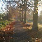 Beginnings of Autumn by thetea