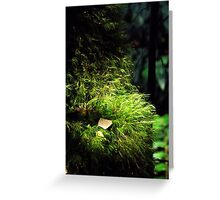 Moss Growing on Tree_Rainforest Walk, Mount Donna Buang Greeting Card
