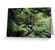 Rainforest Walk, Mount Donna Buang, Victoria, Australia Greeting Card