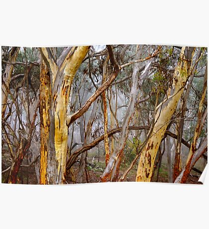 Ghost Gum Poster