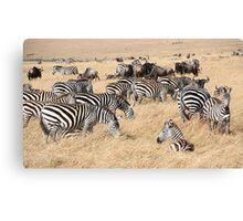 Zebra & Wildebeest Migration Canvas Print
