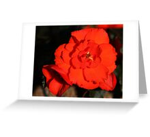 Red Tuberous Begonia Flower Greeting Card