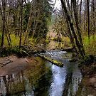 Just A Peek Of Spring ~ Whittaker Creek ~ by Charles & Patricia   Harkins ~ Picture Oregon