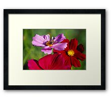 To bee or not.... Framed Print