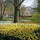 Springtime in the park by Trine