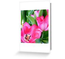 Tulips... Greeting Card