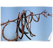 Nature's signature... Poster