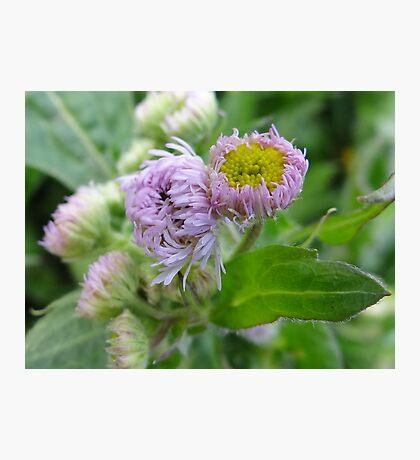 Wild Weed 1 Photographic Print