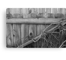 Overgrown Fence Canvas Print