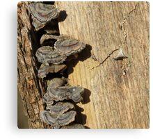 Tree Stump with Fungi Canvas Print