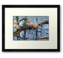 Wetland Reflections 3 Framed Print