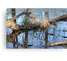 Wetland Reflections 3 Canvas Print