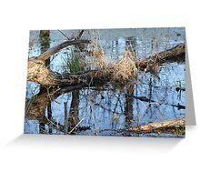 Wetland Reflections 3 Greeting Card