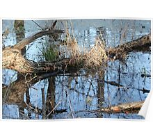 Wetland Reflections 3 Poster