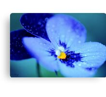 Pansy Blues Canvas Print
