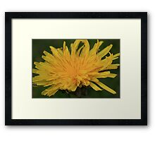 Yellow Flame Framed Print