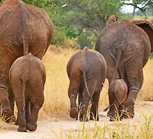 Baby Elephant Walk by Linda Sparks