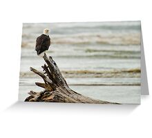 Bald Eagle Perched In The Ocean Breeze - Ocean Shores Greeting Card