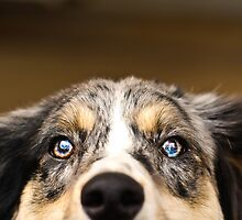 My What Big Eyes You Have by RBarrettPhoto