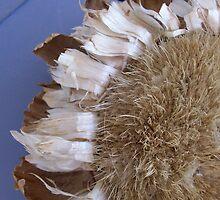 Sunflower closeup by djackson