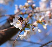 Bee-autiful by GraceRawsthorne