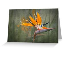 Tropical Song Greeting Card