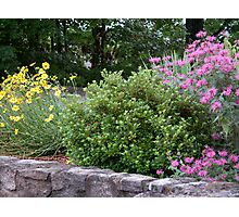Dale Hollow Gardens Photographic Print