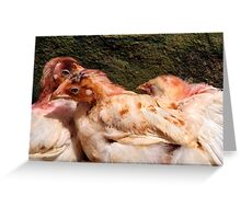 Three Chickens Nestled Against a Wall Greeting Card