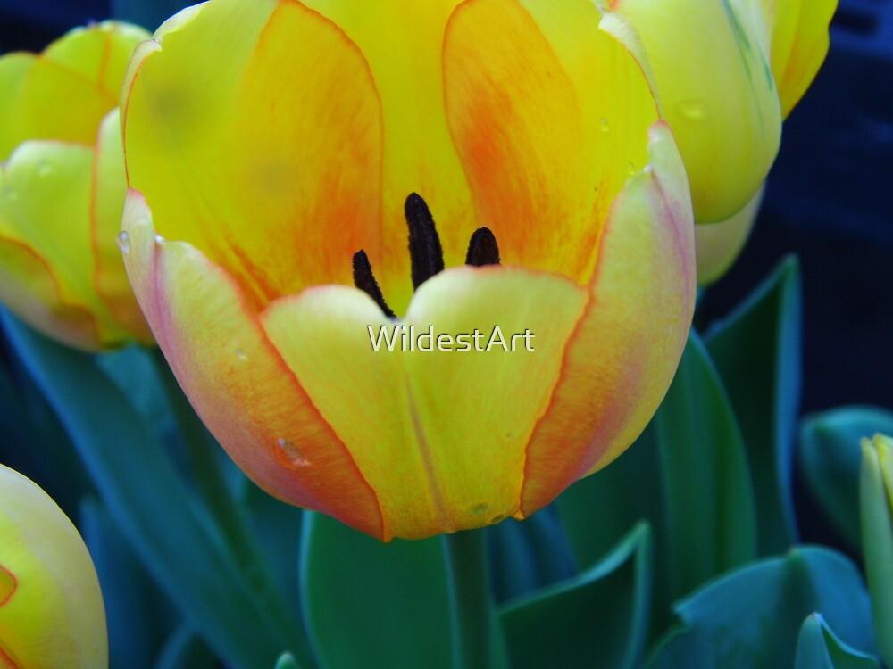 Tulips by WildestArt