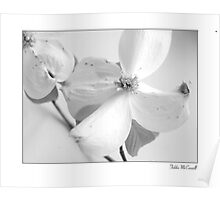 Dogwoods in Black and White Poster