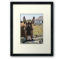 Donkey saying Hello! Framed Print