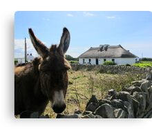 Irish Donkey Canvas Print