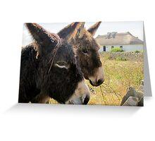 Donkies saying hello! Greeting Card
