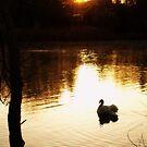 Morning's Golden Light by Barbara Gerstner