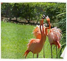 Waikiki Flamingos Poster