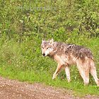 Northwest wolf by Erykah36