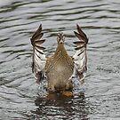 I'm a Duck! by Darakian