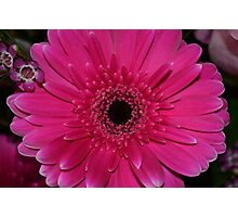 Bright pink flower Photographic Print