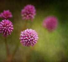 Is it a weed? by Clare Colins