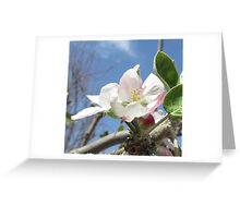Apple Tree Blossom Greeting Card