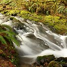 Cascading Waters by Chappy