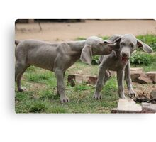 OWWW...... That Hurts Canvas Print