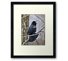 It's awful lonely on this branch Framed Print