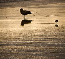 Evening in the Surf by CormacEby