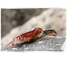 Crab Shell on the Rocks Poster
