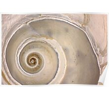 Snail Shell Spiral Poster